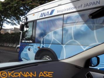 Honu_bus_11_1