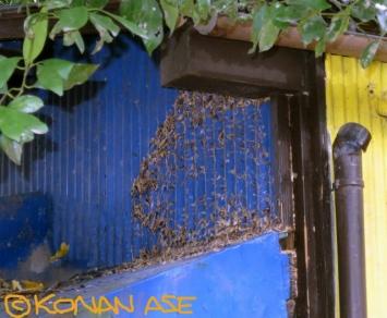 Hornet_nest_333