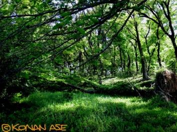 Jungle_969_1