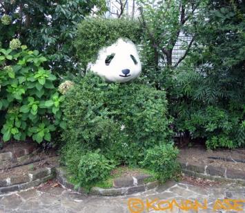 Panda_u002_1