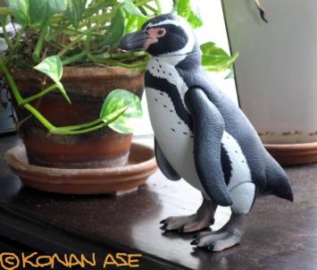 Penguin_316_1_1