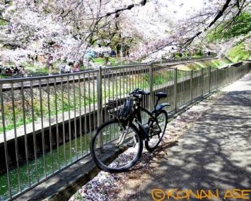Sakura_8880_1