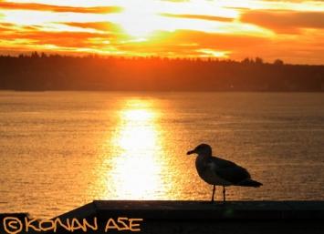 Seagull_264_1