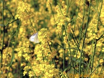 Spring_157_1