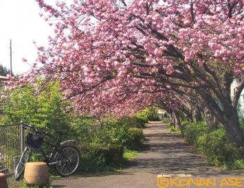 Spring_158_1