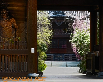 Temple_457_1_1