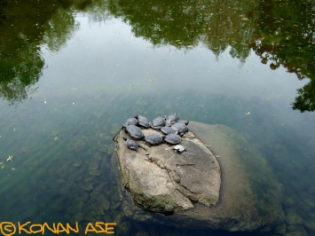 Turtle_049_1